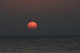 夕陽:wd8